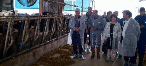 Αποστόλου από Καρδίτσα: «Μέσα από την κτηνοτροφία να γίνει η ύπαιθρος συνώνυμο της ανάπτυξης»