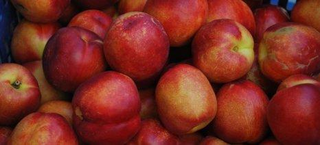 Με βελτιωμένες τιμές οι εξαγωγές θερινών φρούτων