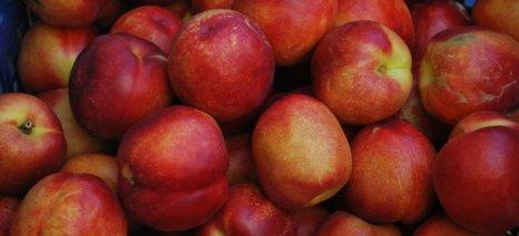 Με βελτιωμένες τιμές συνεχίζονται οι εξαγωγές των θερινών νωπών φρούτων