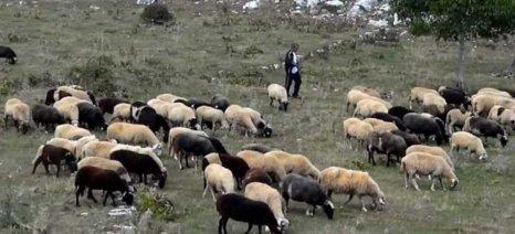 Ερώτηση Δημοσχάκη για τις αποζημιώσεις στους κτηνοτρόφους της Ανατολικής Μακεδονίας-Θράκης