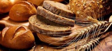 Τροποποίηση του άρθρου για το κατεψυγμένο ψωμί ζητούν οι αρτοποιοί