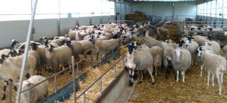 ΟΣΔΕ και βοσκότοποι προβληματίζουν τους κτηνοτρόφους της Θεσσαλίας