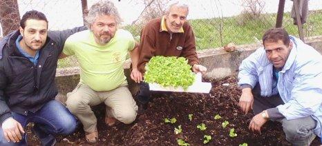 Ένας κήπος αλληλεγγύης στη ΒΙ.ΠΕ Δράμας από το Πελίτι για τους πρόσφυγες