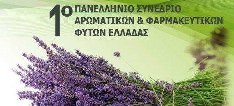 Στην Αλεξανδρούπολη πραγματοποιείται 11-12 Ιουνίου το πρώτο πανελλήνιο συνέδριο για τα αρωματικά φυτά