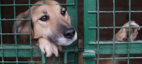 Αναγκαία η αλλαγή της νομοθεσίας για την προστασία και ευζωία των ζώων τονίζει το ΓΕΩΤ.Ε.Ε.