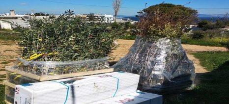 Διανομές φυτών για τις αυλές των σπιτιών στο Κόκκινο Λιμανάκι Ραφήνας