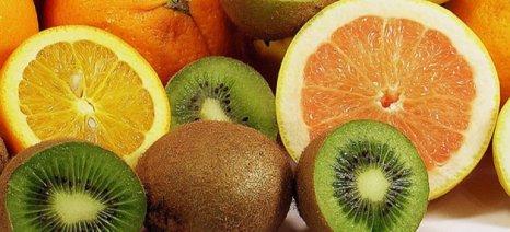 Σε καλό δρόμο οι εξαγωγές ακτινιδίων, εσπεριδοειδών, αγγουριών, μήλων, τοματών και φράουλας