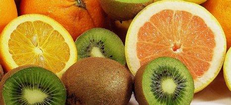 Σταθερά ανοδικά οι εξαγωγές ακτινιδίων, εσπεριδοειδών, αγγουριών, μήλων τοματών και φράουλας