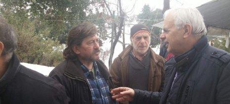 Τους αποκλεισμένους κτηνοτρόφους της Κύμης επισκέφθηκε ο Αποστόλου - εξετάζεται η χορήγηση έκτακτης ενίσχυσης