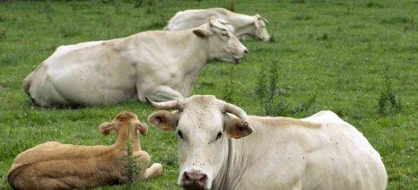 Αίρονται οι απαγορεύσεις εισαγωγών βοείου κρέατος από την ΕΕ στην Κορέα