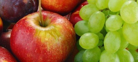 Πληρώθηκαν επιχειρησιακά προγράμματα φρούτων