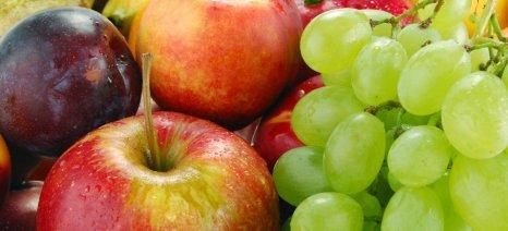 Πληρώθηκαν επιχειρησιακά προγράμματα φρούτων και ελαιουργικοί φορείς
