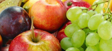 Καλύτερες οι τιμές των εξαγώγιμων νωπών οπωροκηπευτικών από πέρσι