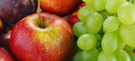 Πληρώθηκαν προγράμματα φρούτων και παραγωγής - εμπορίας μελιού