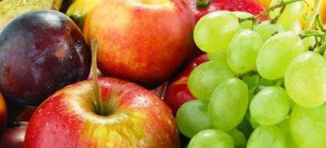 Καμπανάκι για το Βrexit από τους εξαγωγείς φρούτων και λαχανικών