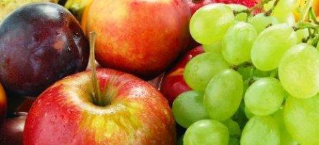 Εντείνονται οι εξαγωγές ακτινιδίων, εσπεριδοειδών, αγγουριών, μήλωντοματών και φράουλας