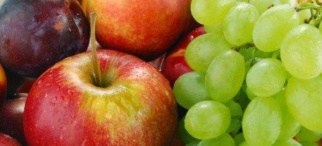 Πληρωμές για διανομή φρούτων και δασώσεις