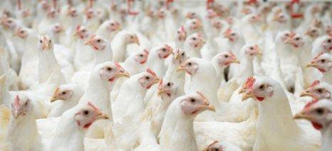 Οδηγίες ίδρυσης μονάδας εκτροφής πουλερικών για παραγωγή αυγών