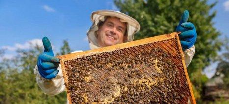 Έως 21 Ιανουαρίου αιτήσεις για τα προγράμματα μελισσοκομίας 2019