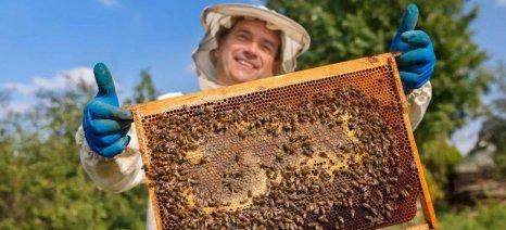 Στο ένα εκατ. ευρώ το ύψος της επιχορήγησης για τα Κέντρα Μελισσοκομίας