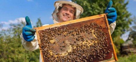 Η Commission ανακοίνωσε αυξημένη στήριξη για τον ευρωπαϊκό μελισσοκομικό τομέα