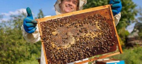 «Plan Bee» για τη σωτηρία των μελισσών και τη μελισσοκομία ετοιμάζει η Κομισιόν