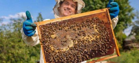 Πράσινο φως από την Commission για την πρωτοβουλία «Σώστε τις μέλισσες και τους αγρότες»