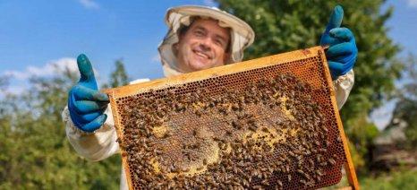 Νέες πληρωμές προγραμμάτων για μέλι, φρούτα, και αναδιαρθρώσεις αμπελώνων