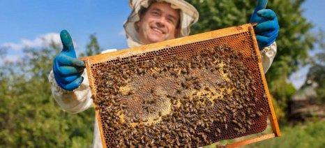 Στα 19,4 εκατ. ευρώ τα κονδύλια για τα μελισσοκομικά προγράμματα 2020 - 2022