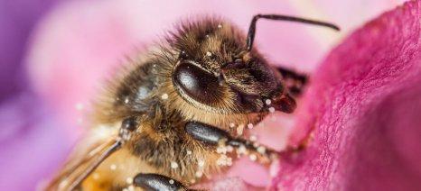Ψήφισμα της Ευρωβουλής για προστασία μελισσών και επικονιαστών από γεωργικά φάρμακα