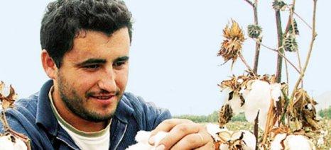 Ημερίδα στην Αλεξάνδρεια για τα νέα δεδομένα στην καλλιέργεια βαμβακιού και καλαμποκιού
