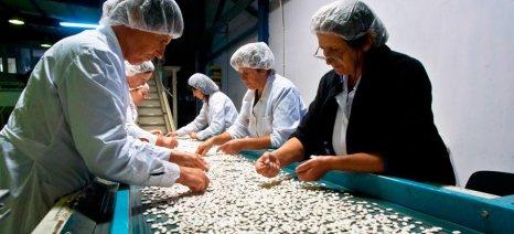 Έως 15 Οκτωβρίου επενδύσεις μικρομεσαίων αγροδιατροφικών επιχειρήσεων