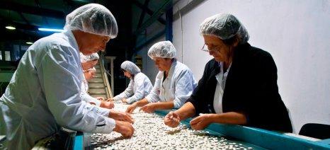 Άμεσα μέτρα στήριξης της φασολοπαραγωγής ζητούν οι αγρότες της Πρέσπας