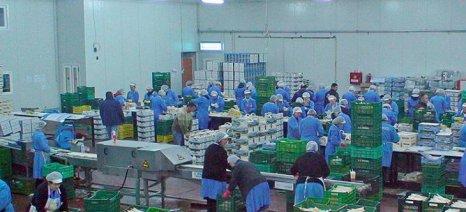 """Πρόσληψη εργατών από τον Αγροτικό Συνεταιρισμό Σπαραγγιών """"ΑΧΕΛΩΟΣ"""""""