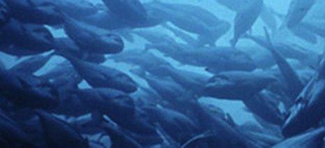 Τα περισσότερα ιδιωτικά σκάφη στις μαρίνες της Μεσογείου μεταφέρουν ξενικά θαλάσσια είδη