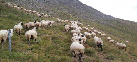 Προσεχώς νέες εξισωτικές σε ορεινές και μειονεκτικές περιοχές