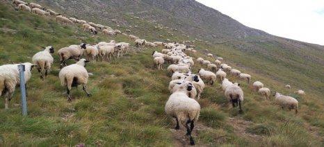 Έως 15 Ιουνίου αιτήσεις εξισωτικής αποζημίωσης – στα 12,5 ευρώ οι ορεινές και στα 8,1 οι νέες μειονεκτικές