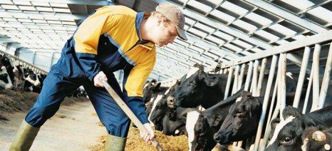 «Ασφαλιστική κλάση αγροτών που δε θα ξεπερνά την υπάρχουσα ελάχιστη μηνιαία εισφορά» ζητά ο Σύνδεσμος Ελληνικής Κτηνοτροφίας