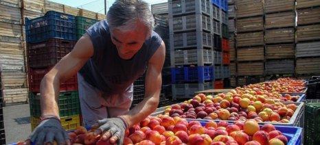 Προγράμματα προώθησης, ελαιοκομικά, οινικές επενδύσεις και νέους γεωργούς πλήρωσε ο Ο.Π.Ε.Κ.Ε.Π.Ε