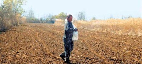 Αρνητικές οι επιπτώσεις του καιρού στην παραγωγή οσπρίων
