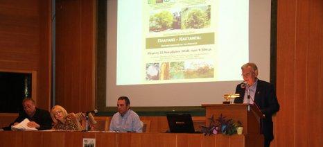Από το «Πράσινο ταμείο» η βιολογική καταπολέμηση της σφήκας της Καστανιάς