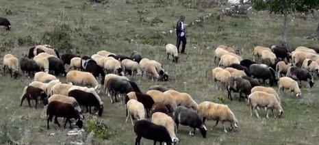 Διαμαρτυρίες κτηνοτρόφων λόγω αποκλεισμού της Λάρισας από αγρεργάτες τρίτων χωρών για την τρέχουσα διετία