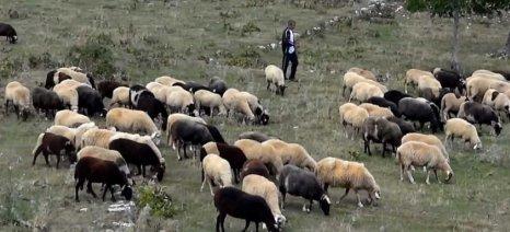 Τεχνικές προδιαγραφές για την διαχείριση νεκρών ζώων στην Δυτική Ελλάδα