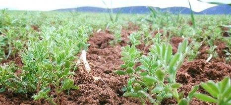 Προσεχώς παρατηρητήριο ζιζανίων που απειλούν τις καλλιέργειες