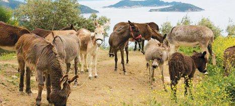 Δράσεις για την ευζωία ιπποειδών, ζώων συντροφιάς και λοιπών ζώων
