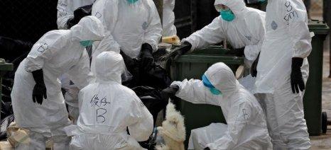 Ευθανασία σε 12.000 πουλερικά στο Λίσετς της Βουλγαρίας λόγω γρίπης των πτηνών