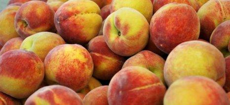 Πληρώθηκαν επιχειρησιακά φρούτων, επενδύσεις και δασώσεις