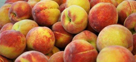 Η ζέστη ενίσχυσε τις εξαγωγές και τις τιμές των θερινών φρούτων