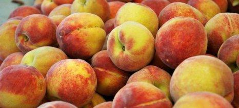 Με αρκετά υψηλές τιμές συνεχίζονται οι εξαγωγές θερινών φρούτων
