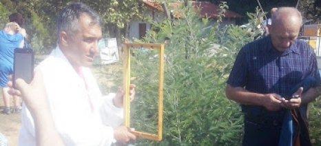 Μια κυψέλη που προσομοιώνει την ζωή των μελισσών μέσα στο δένδρο, είδαν οι Πολωνοί και Λιθουανοί μελισσοκόμοι στην Πιερία